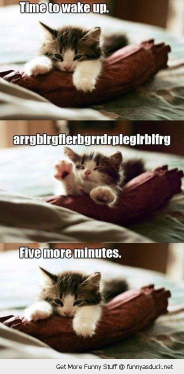 funny-sleepy-tired-cat-5-minutes-pics